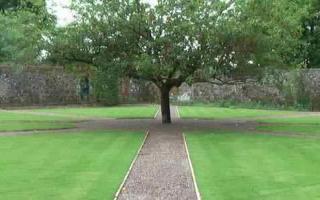 Treen in lawn