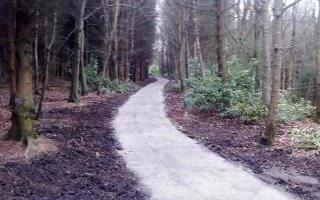 Red squirrel path
