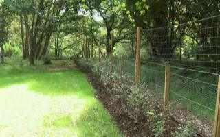 Seeded area and hedge with rabbit and deer fencing